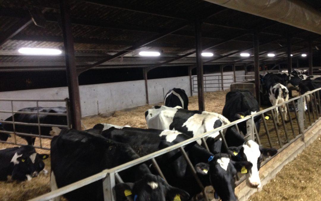 LED Lighting energy savings for dairy farms